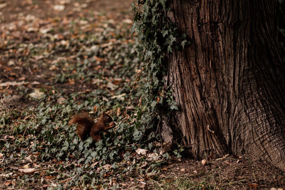 sesja slubna w parku Sanguszkow